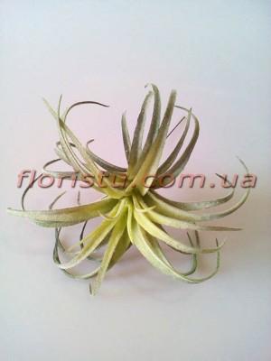 Суккулент искусственный №11 дымчато-зеленый - 15 см