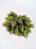 Шишки хмеля дымчато-зеленые пучок 6 шт. 30 шишек