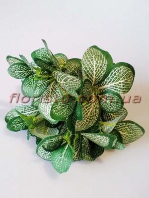 Фитония искусственная Зеленая 30 см