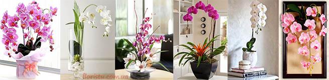 искусственные орхидеи фаленопсис